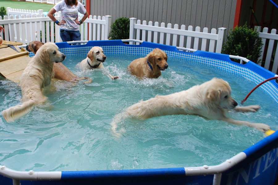 Setting Up A Pool For Therapy For Your Dog Canine Arthritis And Joint