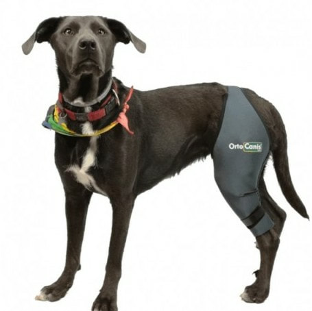 luxating patella knee brace for dogs